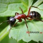 Методы борьбы с муравьями на садовом участке