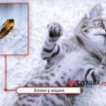 Самые эффективные средства для лечения и профилактики блох у кошек