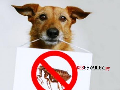 Спрей от блох для помещений, людей и животных: фото и видео урок как обработать собаку от блох
