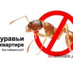 Выведение муравьев из дома
