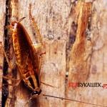 Где скрываются тараканы во всем доме