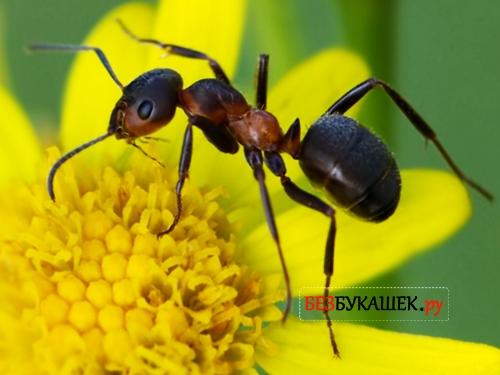 Как долго живут муравьи