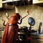 Самые эффективные народные средства от тараканов