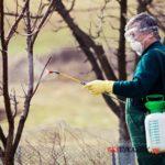 Весенняя и осенняя обработка яблонь от различных насекомых