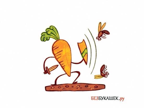 Как бороться с морковной мухой на грядке: Как спасти морковь