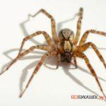Чего ждать если вы увидели паука