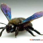 Борьба с пчелами-плотникам всеми способами