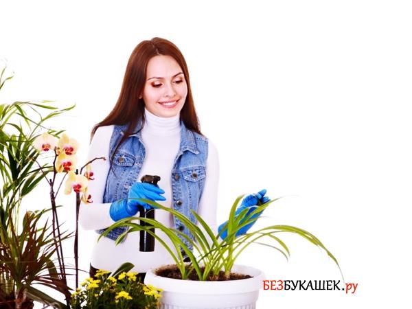 Как бороться с паутинным клещом на комнатных растениях в домашних условиях: методы и средства