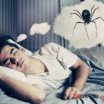 Приснились пауки. Чего ждать?