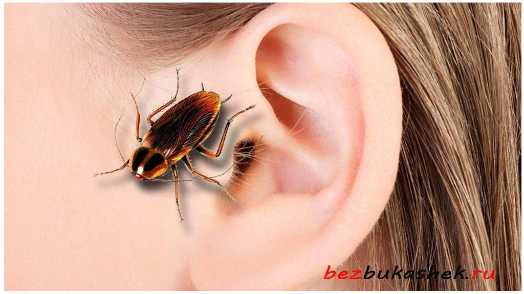 Может ли таракан проникнуть в ухо и что делать в этом случае