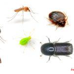 Средство для борьбы с насекомыми: обзор лучших препаратов для борьбы с вредителями
