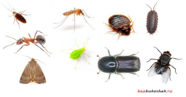 1. Домашние насекомые