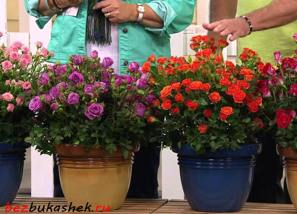 Как убрать тлю с комнатных растений