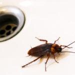 Избавляемся от тараканов в доме: обзор лучших современных средств