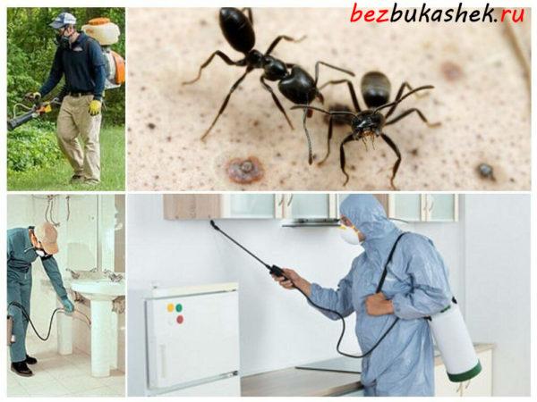 Дезинсекция от муравьев