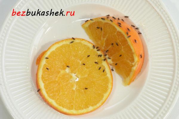 Мошки на фруктах