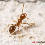 Жизнь муравьев: разновидности, образ жизни и интересные факты о них