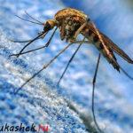 Обзор самых эффективных ловушек для защиты от комаров