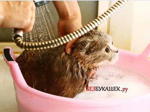 Мытье котенка в тазу