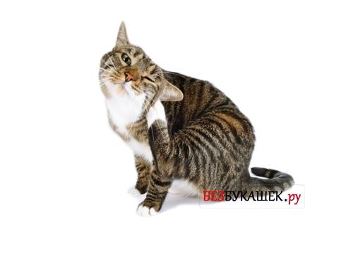 Кота замучили блохи