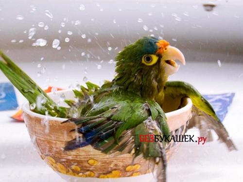 Попугай в растворе воды с инсектицидами