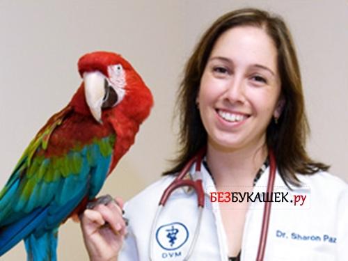 Попугай на руке у ветеринара