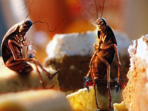 Тараканы портят продукты