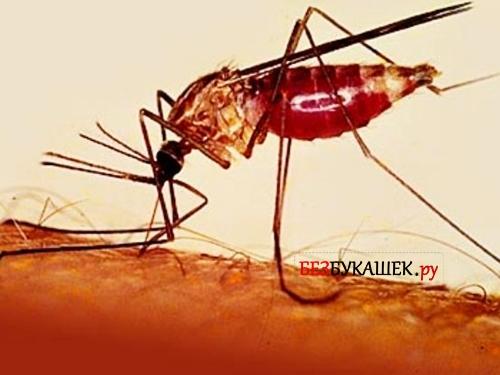 Комар укусил человека