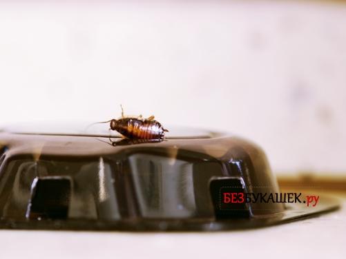 Ловушка для тараканов с ядом