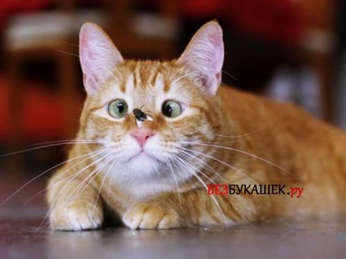 Муха на коте