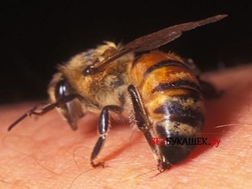 Пчела укусила человека