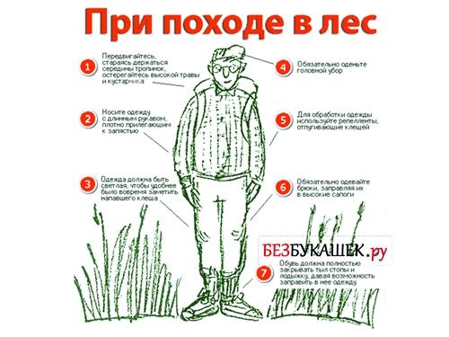 Рекомендации при походе в лес