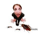 Какую опасность представляет таракан для человека