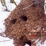 Подготовка муравьев к зиме