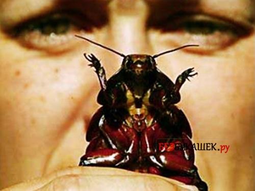 Обряд с тараканом