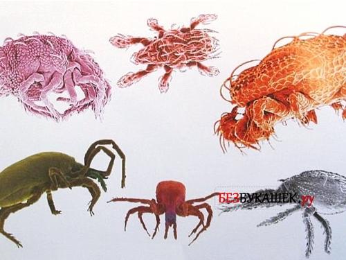 Разнообразие видов клещей