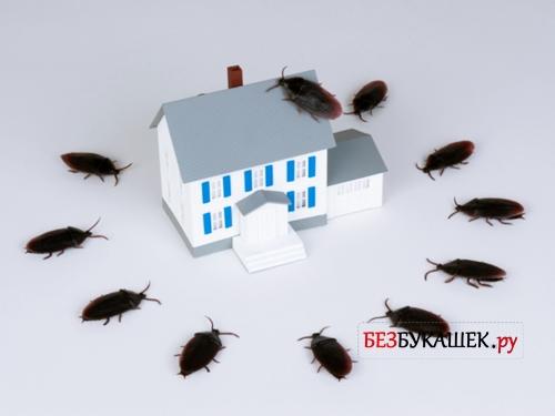 Тараканы вокруг дома