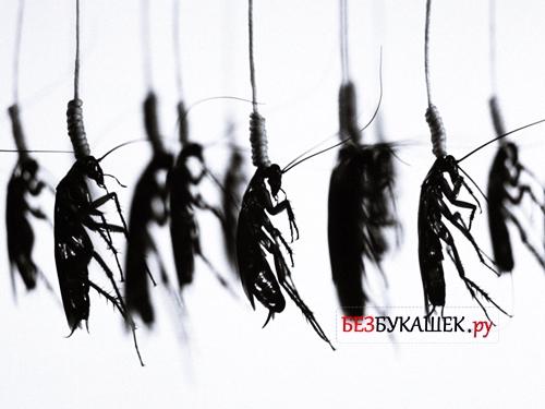 Тараканы повесились