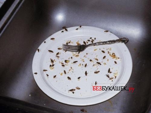 Тараканы там где еда