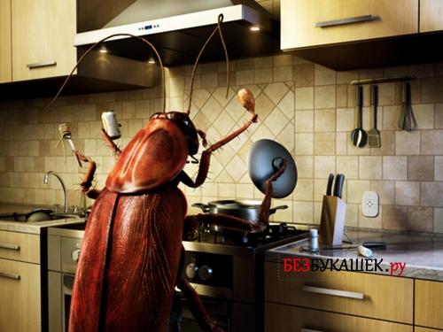 Таракан на кухне, как хозяин