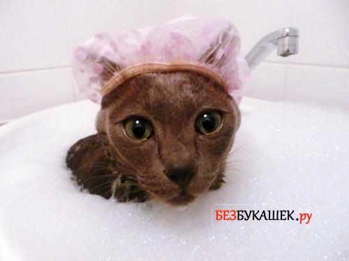 шампунь от паразитов для котят