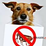 Чем опасны блохи для собак