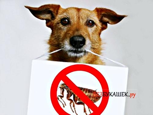 Собака против блох