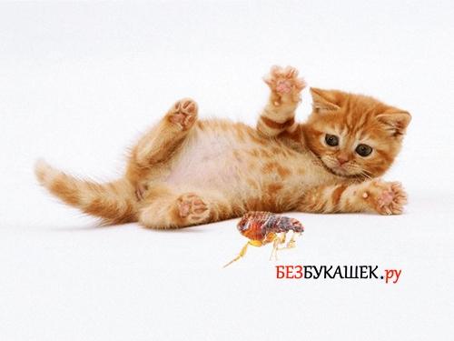 Котенок боится блоху