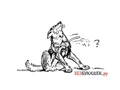 Собака чешется из-за блох