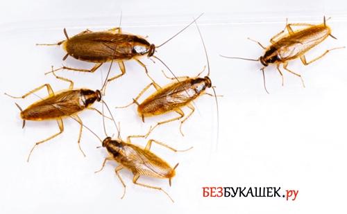 Тараканы разбегаются