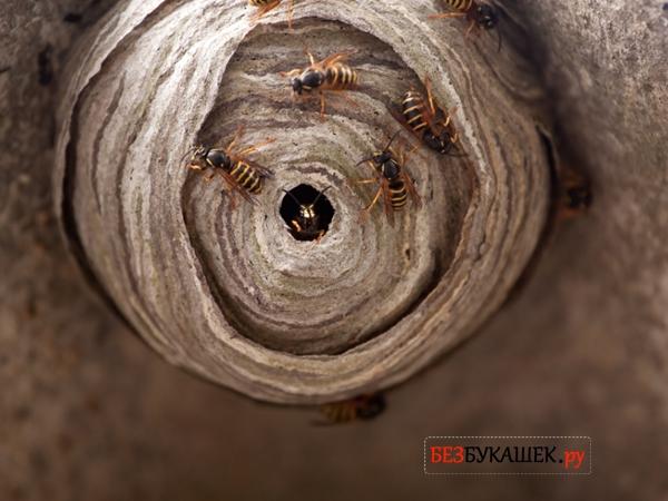 Вот так выглядит осиное гнездо