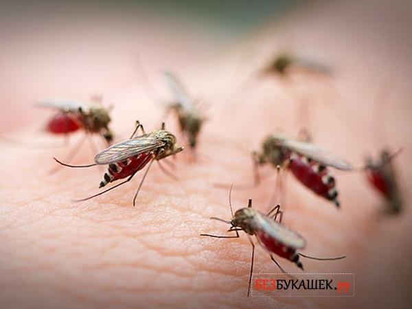Комары кусают