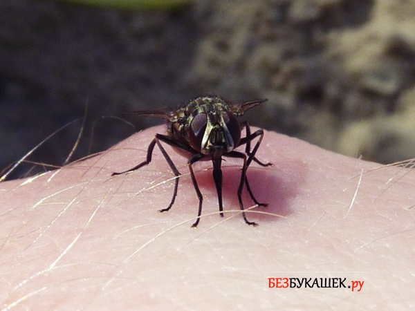 Момент укуса мухи