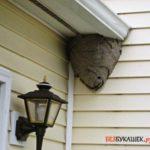 Избавляемся от осиных гнезд в доме